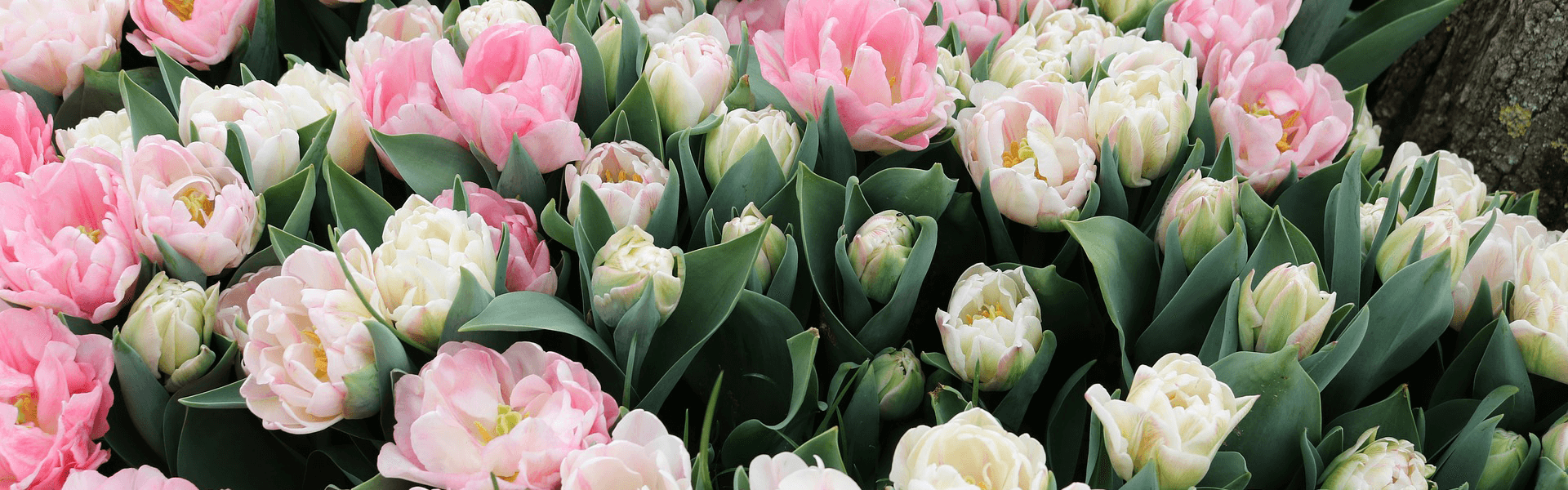 Kwiaciarnia Kaktus
